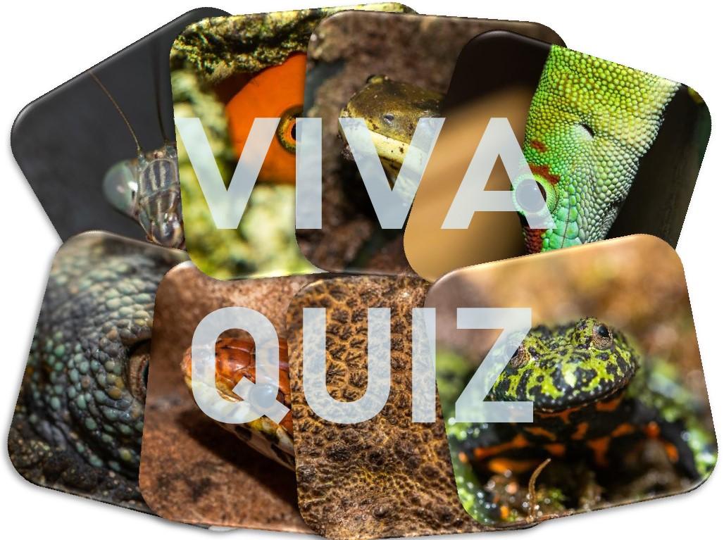 Vivaquiz – alle fünf Teile